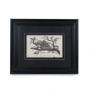 viriathus-grabado-insecto