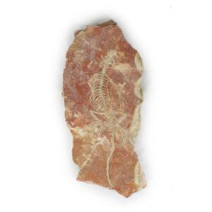viriathus-fosil-replica
